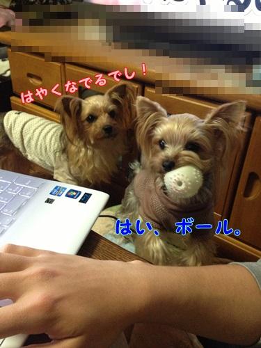 IMG_1082.jpg