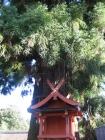 岩本神社03