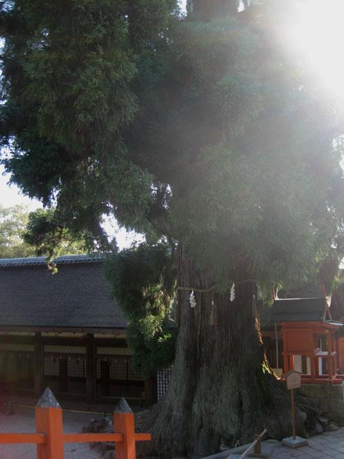 岩本神社06
