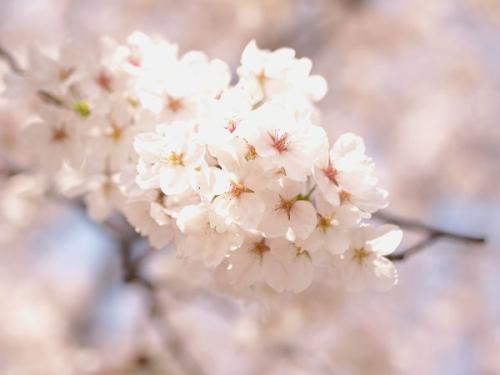 縺輔¥繧雲convert_20130330144732