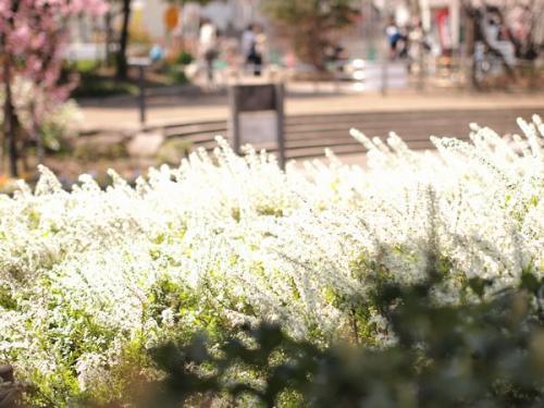 公園_convert_20130330144904