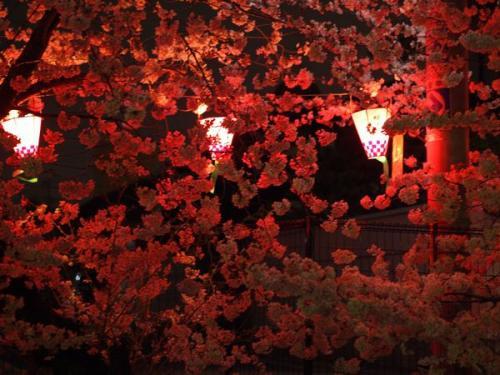 夜桜_convert_20130330210217