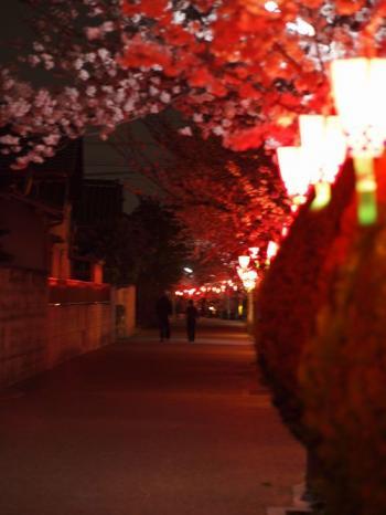 夜桜2_convert_20130330210341
