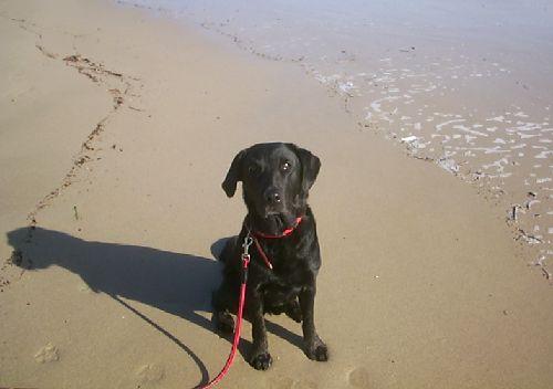 8歳10ヶ月、白浜の海岸で・・・