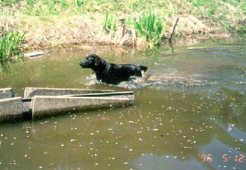 2歳2ヶ月、信州のおばあちゃん家の池