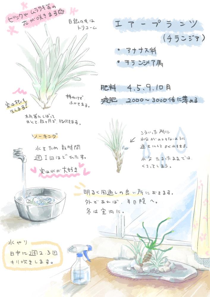 airplants.jpg