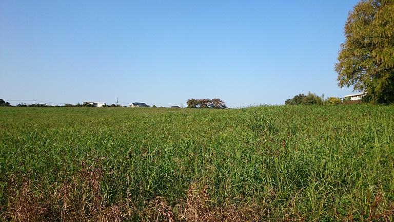 大草原の・・・