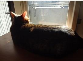 cats_201401051536098e2.jpg