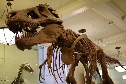 Natural Museum 11