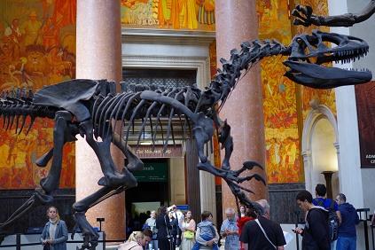 Natural Museum 1