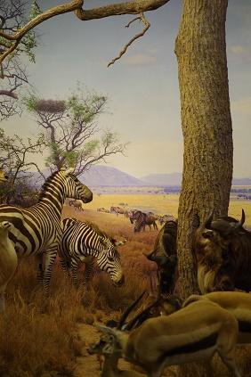 Natural Museum 2