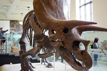 Natural Museum 8