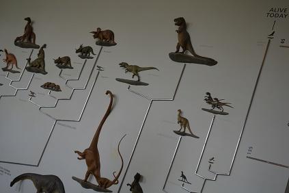 Natural Museum 9