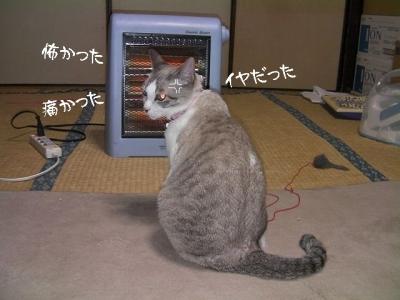 切れる猫03