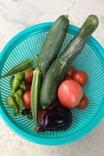 野菜収穫写真R