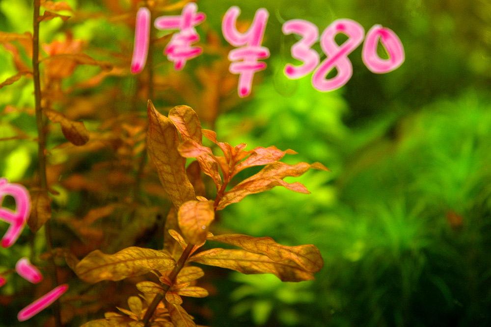 IMGP165300.jpg