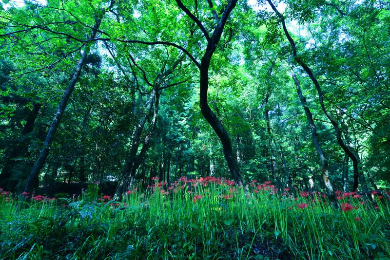 森に生きる (香川県 木田郡 三木町 小蓑)