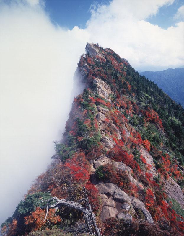 紅葉絶景 (愛媛県 西条市 石鎚山)