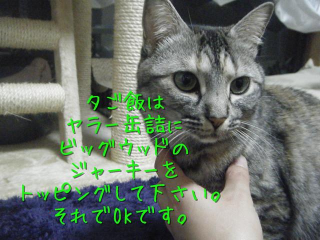 kako-EGQOvLbR48NIAcou.jpg