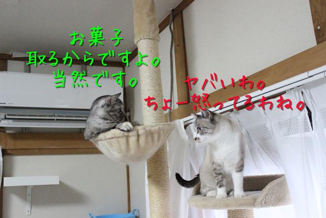 kako-TPoUHEXXlCYV4FxG.jpg