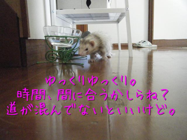 kako-XjcOIOfZX6rGw9i3.jpg