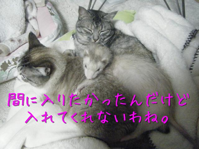 kako-YC3lnafJQc6tdp01.jpg