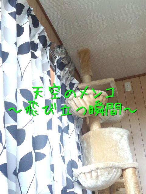 kako-kSGmaoPHAbA88dk6.jpg