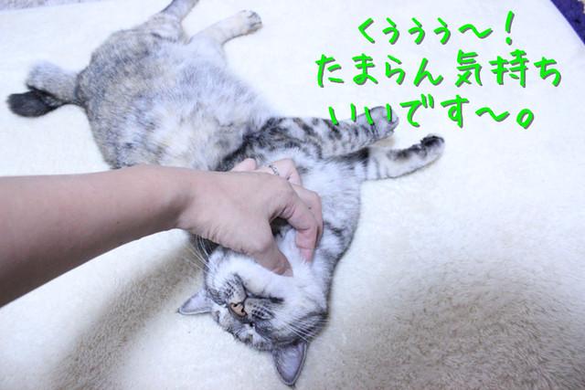 kako-oyzuAm0QG8QoD7YD.jpg