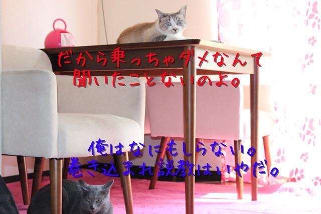 kako-sPUeC4OTT1RBHvMG.jpg