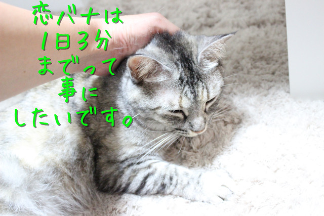 kako-swduoSmLPbHf4A80.jpg