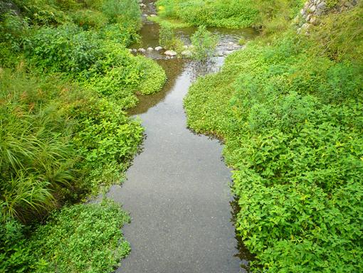 学校前の川