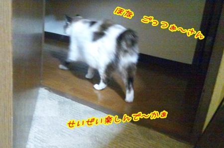 DSC_0215 (6)