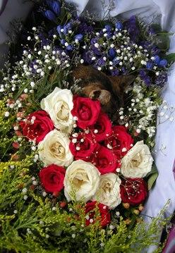 テネシーお葬式248