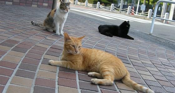 3cats559.jpg