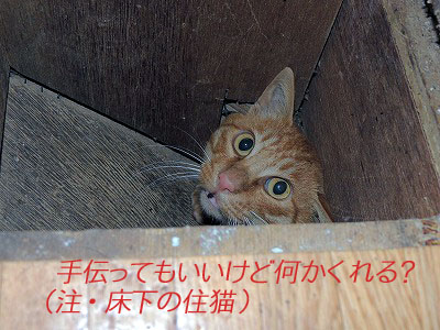 手伝い猫DSCN9850のコピー
