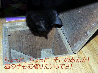 手伝い猫DSCN9846のコピー