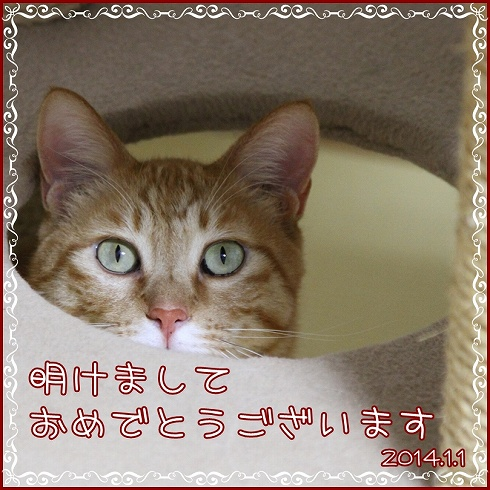 IMG_39141.jpg