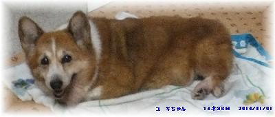 20yuki1.jpg