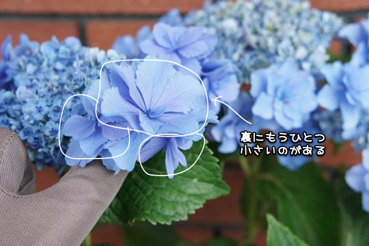 DSC06598r.jpg