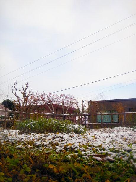 20131127小雪