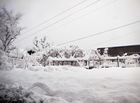 20131128積雪