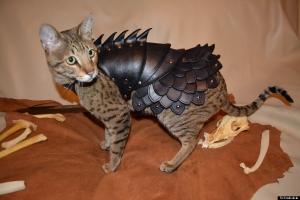 o-CAT-BATTLE-ARMOR-900.jpg
