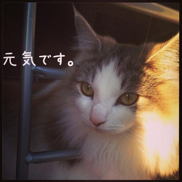 fc2blog_2013121302363196e.jpg
