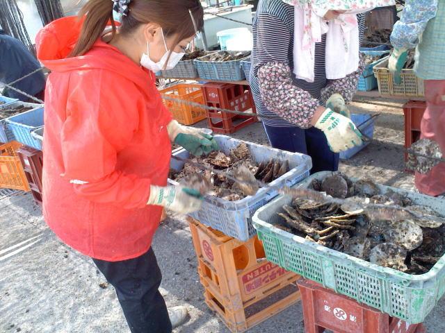 牡蠣の種付け作業 3