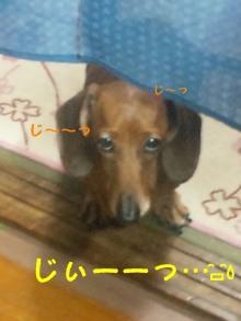 ♪ALL HAPPY DAY♪*~趣味のある暮らし~*-130423_191027_ed.jpg
