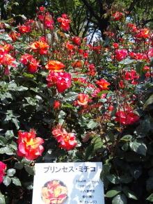 ♪ALL HAPPY DAY♪*~趣味のある暮らし~*-DVC00085.jpg