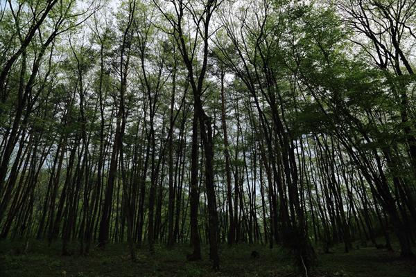 へつり林s
