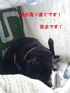 moblog_71183693.jpg
