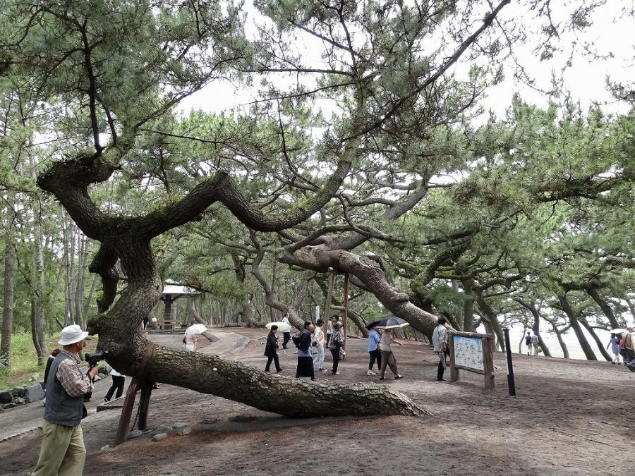 焼津黒潮温泉 099