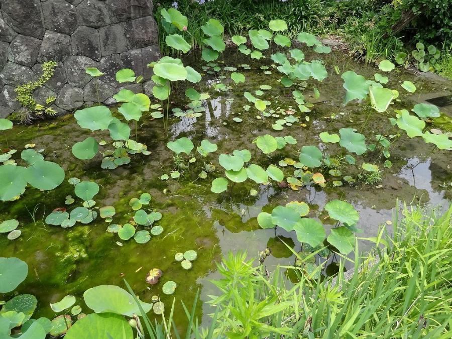 焼津黒潮温泉 120